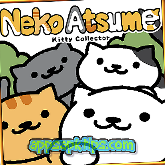 Neko Atsume Kitty kolekcionierius
